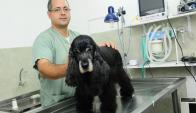 """""""Tener un perro en regla cuesta a los dueños US$ 1.500 al año"""". Foto: Archivo El País"""
