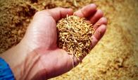 Uruguay es el séptimo productor mundial del cereal. Foto: Pixabay