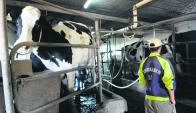 Tambo: Se perdieron vacas en producción y bajó la productividad. Foto: archivo El País