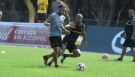 Peñarol entrenó en espacios reducidos en Los Aromos. Foto: Francisco Flores