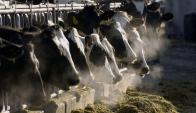 Apuesta a mejorar la dieta para elevar producción de leche sigue en pie. Foto: Archivo
