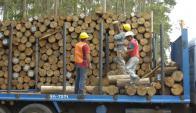 Crece consumo interno de madera nacional. Foto: Archivo El País
