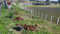 La Intendencia cedió predio para plantar árboles. Foto: Néstor Araújo