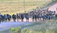 En rural de Tacuarembó y por CampoTV remata Indarte. Foto: archivo El País