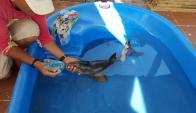 El delfín bebé apareció en la costa de Neptunia. Foto: Facebook: Sos Rescate Fauna Marina