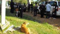 Comisión de Zoonosis analizará a los 200 perros que hay en Arenitas Blancas. Foto: L. Pérez