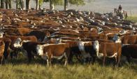 La falta de agua no ayuda y la Federación Rural cree que bajará el área agrícola. Foto: A.Colmegna.
