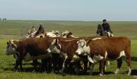Ganadería creció 121 kilos por ha. la producción de carne. Foto: A. Colmegna