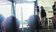 En rural de Tacuarembó remató ayer en el Escritorio Dutra. Foto: archivo El País