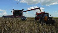 """Según Oddone, """"la producción de soja baja en el país"""". Foto: Daniel Rojas."""