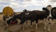 Tambo: la crisis de la lechería persiste Foto: archivo El País