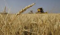 La soja, el maíz, los lácteos son otros de los productos que bajaron su valor. Foto: AFP