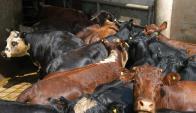 En algunas zonas el clima posibilitó que se volviera a regularizar carga de ganado. Foto: Archivo El País