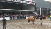 Ganador: el Gomensoro de Santa Marcia se lució en Palermo. Foto: Pablo D. Mestre