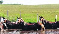 En Don Tito y por Valdeztv.com, remate Valdez & Cía. Foto;: archivo El País