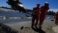 Aparecieron pezes muertos en la Playa Ramírez. Foto: Fernando Ponzetto