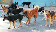 Perros abandonados que forman jaurías jaquean a funcionarios de UTE. Foto: archivo El País