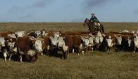 """BROU: La ganadería es la que está """"menos complicada"""". Foto: Ariel Colmegna"""