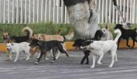 Si no se desarrollan políticas públicas en 2020 habrá 2 millones de perros. Foto: archivo El País