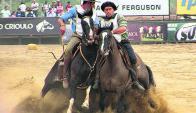 Los caballos criollos brindaron un gran espectáculo. Foto: Pablo D. Mestre