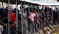 Refugiados se agolpan en la frontera entre Macedonia y Grecia. Foto: AFP.