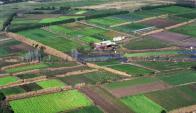 Campos: Hay 190.000 hectáreas en el régimen de Colonización. Foto: archivo El País