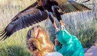 El ave rapaz en pleno ataque. foto: Instagram/ 55chris