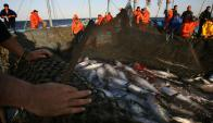 Hay 574 especies de peces. Foto: AFP