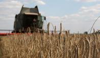 El trigo tuvo problemas de calidad, lo que hizo aumentar los precios- Foto: AFP