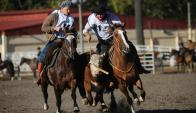 Los caballos Criollos dieron espectáculo en la Rural del Prado. Foto: El País