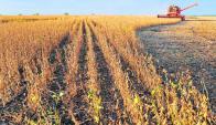 Se precisaban rendimientos récord de la soja para neutralizar la baja de precios. Foto: Archivo