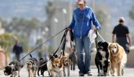 En la vía pública es obligatorio pasear a los perros con correa y collar.