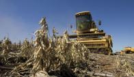 Cosecha de soja: en los últimos 14 años se convirtió en uno de los principales exportadores.