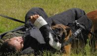 Perros de la Guardia Republicana. Foto: Ariel Colmegna