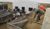 El lunes pasado llegó un camión con ración para vacas a Colonia América.