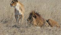Sol y Luna llegaron en octubre de 2014. Foto: Facebook The Wild Animal Sanctuary