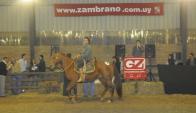 Se concretó el remate de los caballos Cuarto de Milla y Paint. Foto: El País