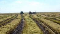 Se plantaron alrededor de 160.000 hectáreas y hubo 3 franjas de siembras. Foto: Archivo