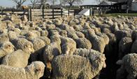Encierran majadas para protegerlas y productores se arman para evitar carneadas.  Foto: L. Pérez