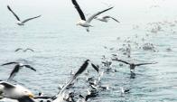 Las gaviotas llegan, incluso, desde la Antártida a poner huevos en Isla de de las Gaviotas.