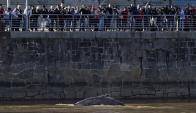 La ballena de Puerto Madero sigue sin aparecer. Foto: AFP.
