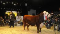 Dutra remató el toro de Las Anitas en US$ 22.000. Foto: A. Colmegna