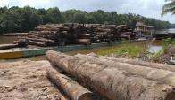 La destrucción de los bosques ricos en carbono libera gases con efecto de invernadero.