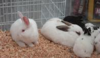 Conejos. Foto: Archivo El País