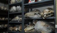 Museo de Historia Natural. Foto: Archivo El País