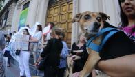 Exhortan a sacrificar perros en caso de constatarse algún síntoma. Foto: F. Ponzetto