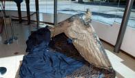 Águila: la pieza está guardada desde hace años dentro de una caja, en el depósito del Fusna. Foto: EFE