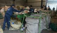 El 4% de los clasificadores de residuos trabaja en plantas de Montevideo. Foto: A. Colmegna