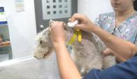 Comenzó la aplicación del chip a los perros. Foto: Francisco Flores
