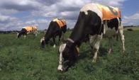 Los agricultores que hace 10 mil años tuvieron la idea de beber leche migraron a Europa. Foto: Reuters